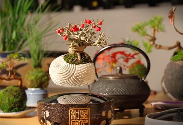 Air Bonsai at werd.com