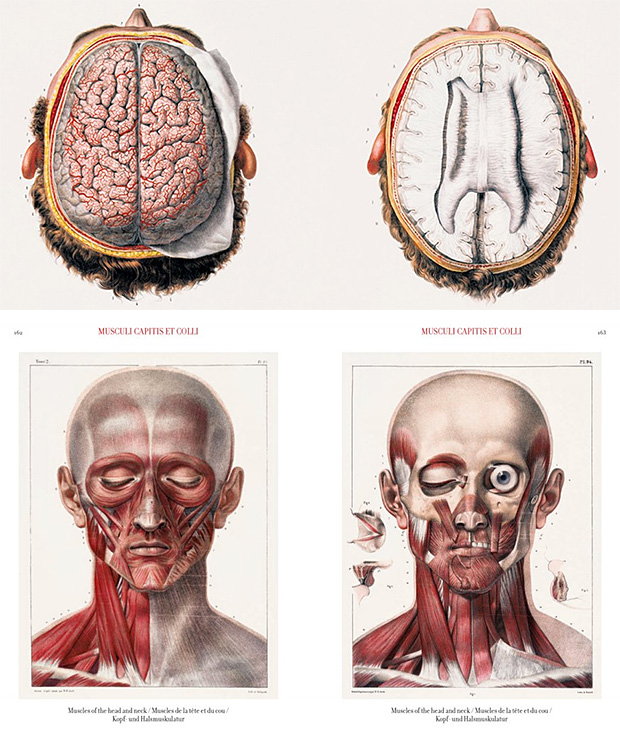 Bourgery. Atlas of Human Anatomy and Surgery at werd.com