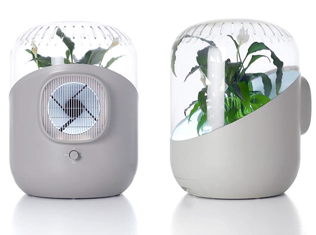 Andrea: A Plant-Based Air Purifier at werd.com