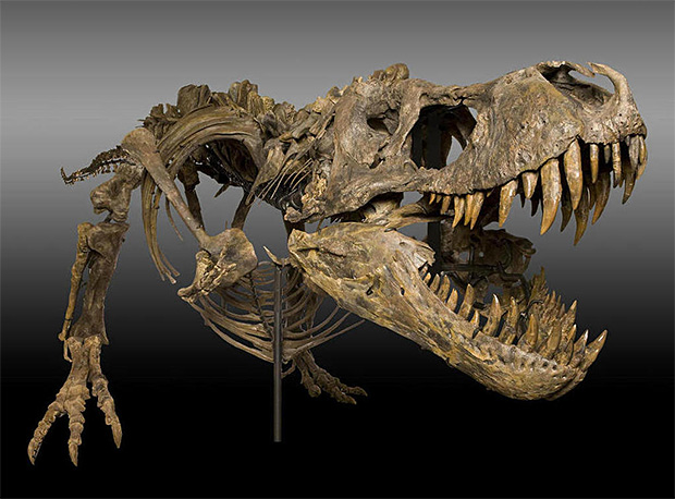 Dinosaurs & Distinguished Fossils Auction at werd.com