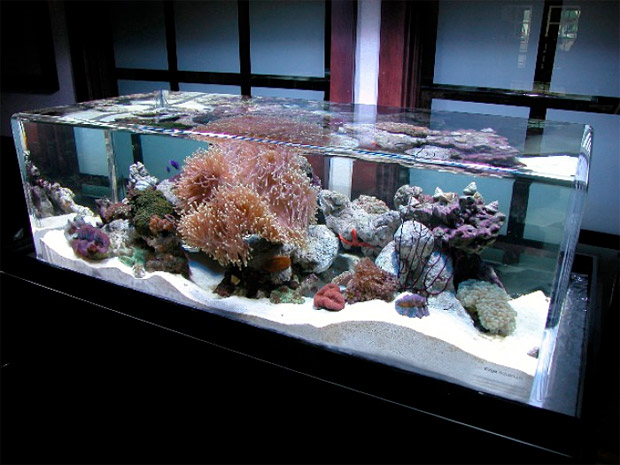 ZeroEdge Aquariums at werd.com